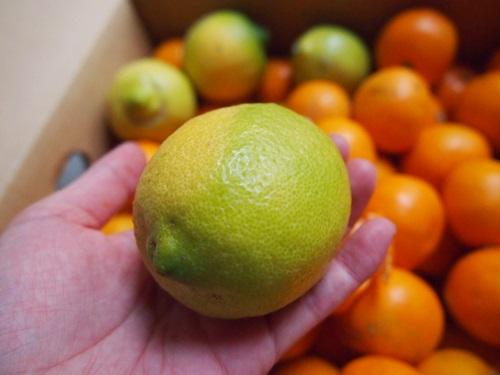おまけのレモン